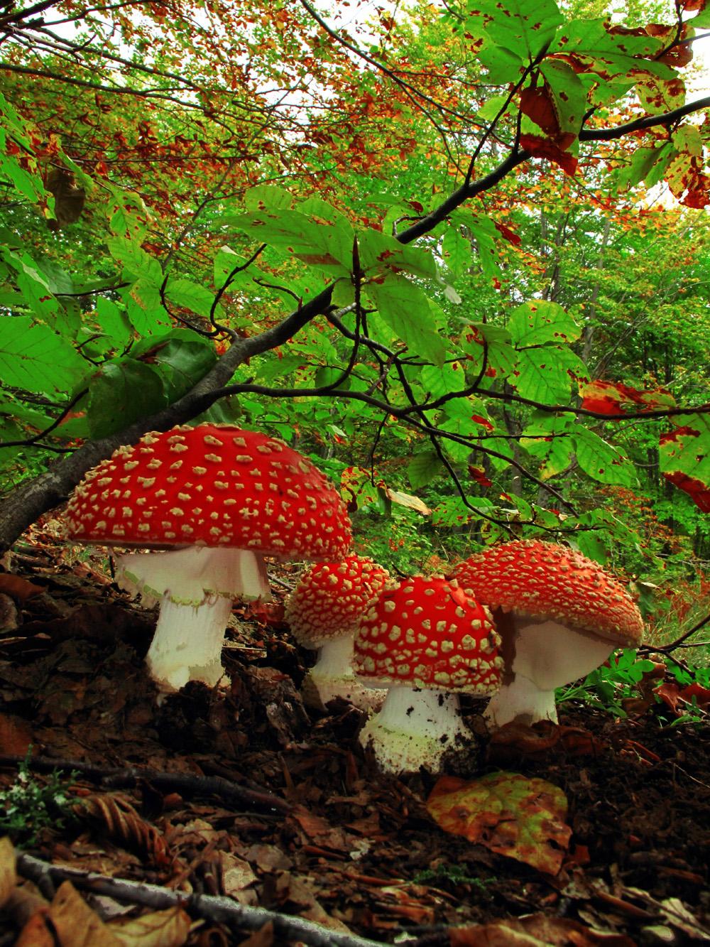 Γρεβενά: Η χώρα των μανιταριών – Δείτε απίστευτες φωτογραφίες από την αναζήτηση και την συλλογή μανιταριών