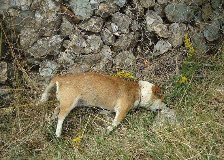 33 σκυλιά νεκρά από φόλες στο χωριό Άρδασσα Εορδαίας (Φωτογραφίες)