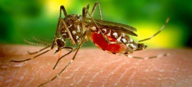 Ποιες περιοχές κινδυνεύουν από τον ιό του Δυτικού Νείλου – Η λίστα του ΚΕΕΛΠΝΟ