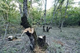 Φλώρινα :Αλβανός έκοβε ξύλα σε Ελληνικό έδαφος – Συνελήφθη