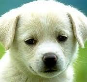 Πως θα εκπαιδεύσετε τον σκύλο σας να μην γαβγίζει