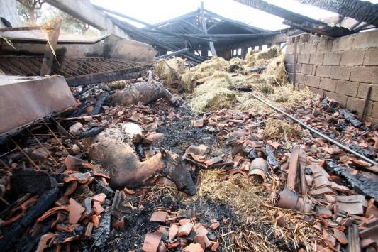 Αποζημίωση σε κτηνοτρόφους που έχασαν ζώα εξατιάς πυρκαγιών, κεραυνών και πλημμύρων