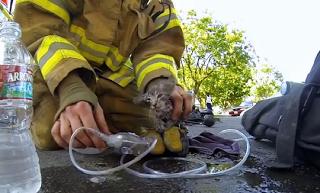 Πυροσβέστης επαναφέρει στη ζωή γατάκι από σπίτι που κάηκε!