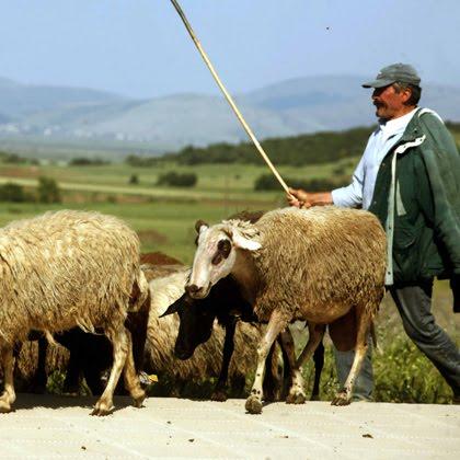 Ημερίδα για τους κτηνοτρόφους της Π.Ε. Γρεβενών