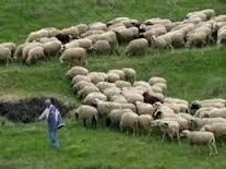 Παρέμβαση του Περιφερειάρχη κ. Δακή  για το πρόβλημα των κτηνοτρόφων με τις βοσκήσιμες εκτάσεις