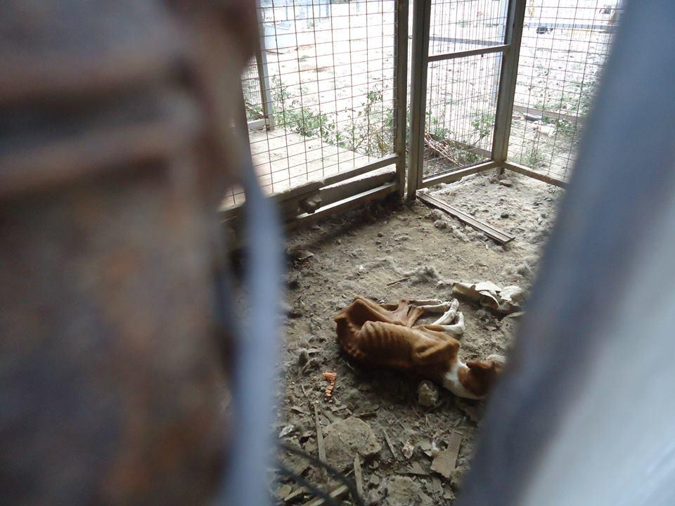 Τριτοκοσμική κατάσταση στο κολαστήριο – κυνοκομείο Φλώρινας – Σοκαριστικές φωτογραφίες