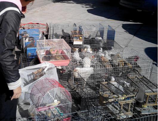 Νέοι Έλεγχοι στο Παράνομο Εμπόριο Ζώων του Σχιστού