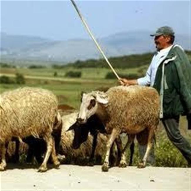 Την Παρασκευή 11 Οκτωβρίου 2013 ο ΕΛΓΑ θα καταβάλλει στους τραπεζικούς λογαριασμούς των κτηνοτρόφων αποζημιώσεις ζωικού κεφαλαίου ύψους 81.046€