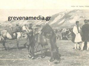 GREVENAMEDIA11