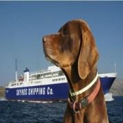 Τραγωδία με κυνηγόσκυλα σε καράβι της Σκύρου