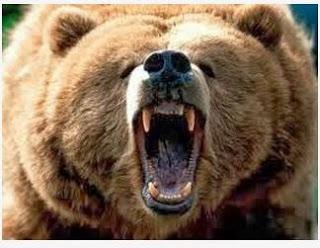Αρκούδα κατασπάραξε μικρό αλογάκι στο Φανό Φλώρινας