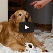 Ένοχοι σκύλοι με απίθανες αντιδράσεις (Video)
