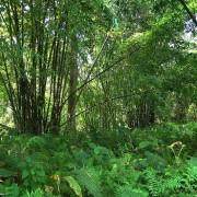 Ο αγρότης που φύτεψε μόνος του ένα δάσος… …και σχεδιάζει δεύτερο