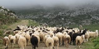 Επείγουσα ανακοίνωση για τους κτηνοτρόφους του Νομού Γρεβενών