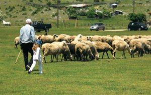 Ε.Α.Σ. Αμυνταίου: Πληρώθηκαν για όλους τους βοσκότοπους
