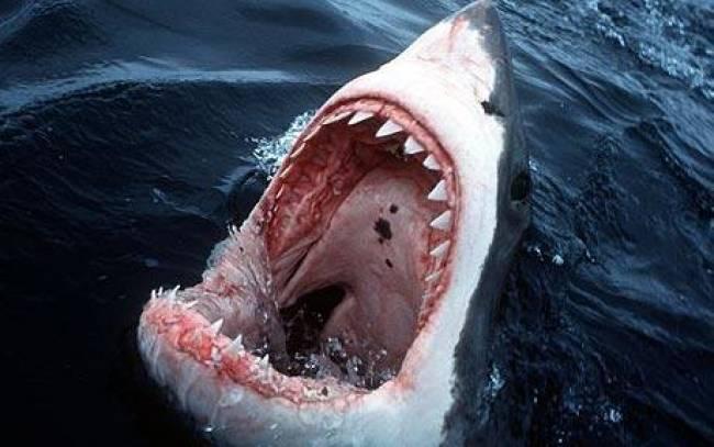 Νεκρός σέρφερ στην Αυστραλία από επίθεση καρχαρία