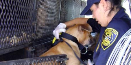 Ίδρυση Ελληνικής Αστυνομίας για τα Ζώα