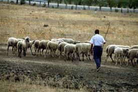 Καταβλήθηκε στους κτηνοτρόφους το υπόλοιπο ποσό εξισωτικής αποζημίωσης