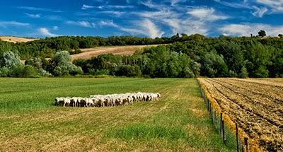 Γρεβενά: Αναρτήθηκαν οι κατατάξεις των δικαιούχων και των απορριπτόμενων για τη Βιολογική Κτηνοτροφία έτους 2013