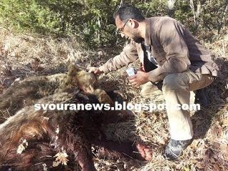 Καστοριά: Νεκρές 2 αρκούδες στον Πολυάνεμο – Μάνα και κόρη βρέθηκαν αγκαλιασμένες (Φωτογραφίες)