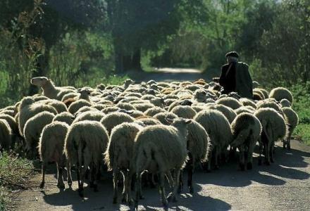 Κτηνοτρόφοι του Ελεύθερου ζητούν βοσκότοπους για βιολογική κτηνοτροφία – Κάτοικοι της κοινότητας Ελευθέρου κατέθεσαν την παρακάτω αίτηση στον Δήμο Γρεβενών