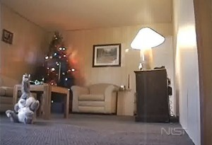 Τι μπορεί να προκαλέσει ένα χριστουγεννιάτικο δέντρο σε ελάχιστα δευτερόλεπτα (Bίντεο)