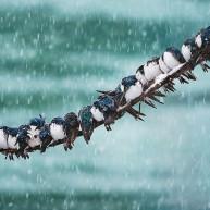 Ζώα ποζάρουν σε χειμωνιάτικα τοπία!