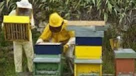 Γενική Συνέλευση του Μελισσοκομικού Συλλόγου Κοζάνης