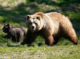 Δράσεις στην υπηρεσία της συνύπαρξης ανθρώπου και αρκούδας