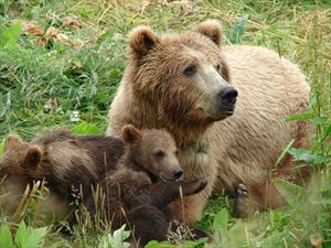 Φλώρινα: Ξύπνησαν οι αρκούδες στο Καταφύγιο και περιμένουν τους επισκέπτες