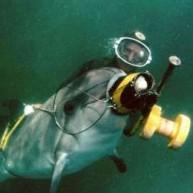 Τα «στρατιωτικά» δελφίνια της Κριμαίας πάνε στη Ρωσία