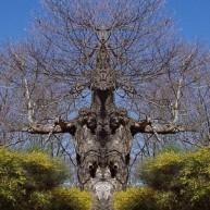 Δέντρα που προκαλούν… τρόμο