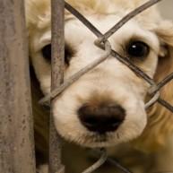 Ανοίγουν τον έναν οίκο ανοχής για… κτηνοβάτες πίσω από τον άλλο στη Γερμανία