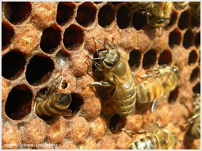 Συνελήφθη 29χρονος αλλοδαπός για ζωοκλοπή (κλοπή μελισσών) σε περιοχή της Καστοριάς