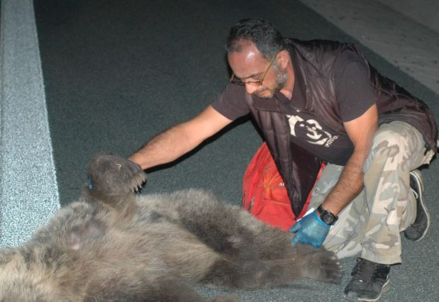 Ατύχημα με θύμα αρκούδα στον κάθετο άξονα Σιάτιστα-Κρυσταλλοπηγή
