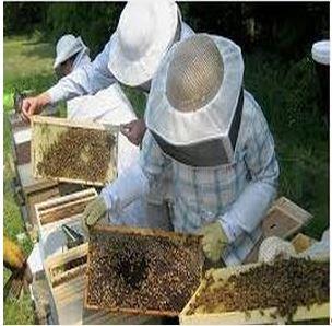 Σεμινάριο μελισσοκομίας στις 27-07-2014, στην αίθουσα του Νομαρχιακού Συμβουλίου Κοζάνης