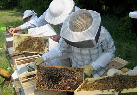 Γρεβενά: Ταχύρρυθμη εκπαίδευση Μελισσοκόμων