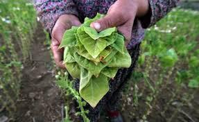 Αντιπεριφέρεια Γρεβενών : Ανακοίνωση για τους αγρότες