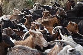 Αναρτήθηκαν  στους Δήμους Γρεβενών και Δεσκάτης καθώς και στην Π.Ε. Γρεβενών  οι τελικές καταστάσεις με τους δικαιούχους και απορριπτομένους της δράσης  «Διατήρηση απειλούμενων αυτόχθονων φυλών αγροτικών ζώων»