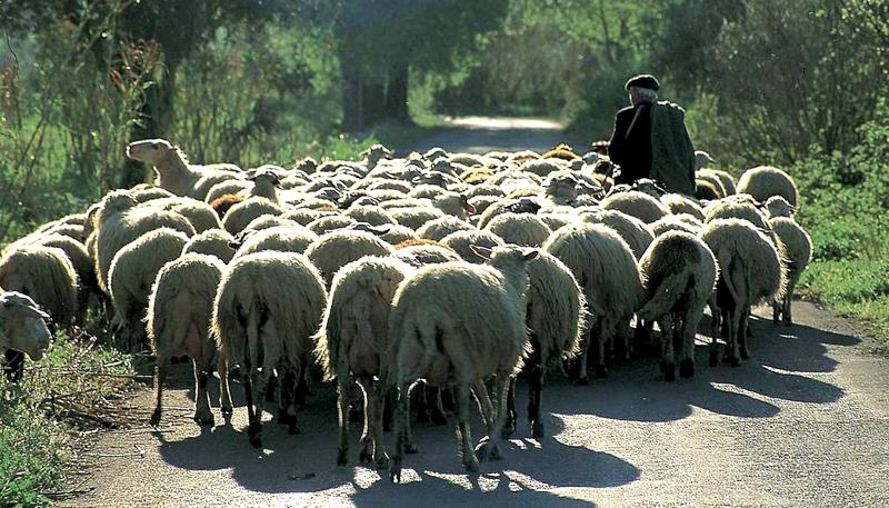 Αίτηση οικονομικής αποζημίωσης για τους κτηνοτρόφους που έχουν χρησιμοποιήσει εγκεκριμένα εντομοκτόνα και εντομοαπωθητικά
