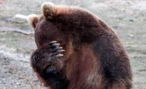 Καστοριά: Αυτοκίνητο παρέσυρε και σκότωσε την αρκούδα που βλέπετε – Δείτε το βίντεο!