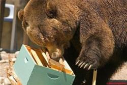 Καστοριά: Άμεσα μέτρα ζητούν κτηνοτρόφοι και αγρότες που έχουν πληγεί από επιθέσεις αρκούδων