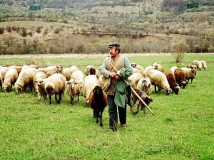 Ο Κτηνοτροφικός Σύλλογος Γρεβενών προσκαλεί τα μέλη του συλλόγου και όλους τους κτηνοτρόφους  για ενημέρωση κτηνοτροφικών θεμάτων την Τετάρτη 18 Μαρτίου