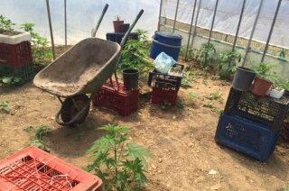 Γρεβενά: Σύλληψη 46χρονου για καλλιέργεια και κατοχή κάνναβης και παράνομη οπλοκατοχή
