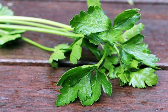 Το Ελληνικό βότανο κατά του καρκίνου- Απαραίτητο στην Μεσογειακή Διατροφή
