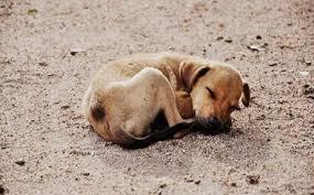 Δήμος Γρεβενών:  Ολοκληρώθηκαν οι εργασίες στο καταφύγιο αδέσποτων ζώων