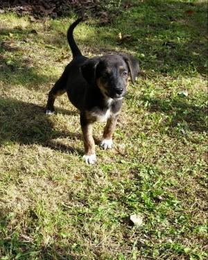Γρεβενά – SOS: Χάθηκε  το εικονιζόμενο σκυλάκι – Δίνεται αμοιβή 100 ευρώ