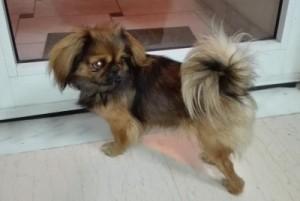 Γρεβενά SOS: Βρέθηκε ο εικονιζόμενος σκύλος στην περιοχή γύρω από το Δημαρχείο Γρεβενών