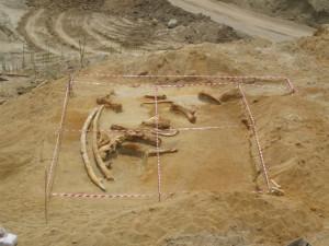 Τι γίνεται με το κέντρο παλαιοντολογίας στην Μηλιά Γρεβενών;