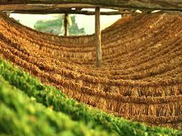 Γρεβενά: Πιστώθηκαν οι λογαριασμοί των δικαιούχων πληρωμής έτους 2012, του προγράμματος  «Αμειψισπορά με ξηρικές καλλιέργειες σε καπνοπαραγωγικές περιοχές»